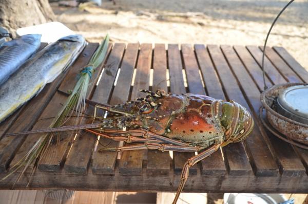 Fischmarkt Las Terrenas