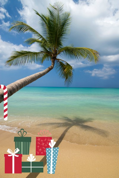 Palm tree leaning over beach on the Samana peninsula.