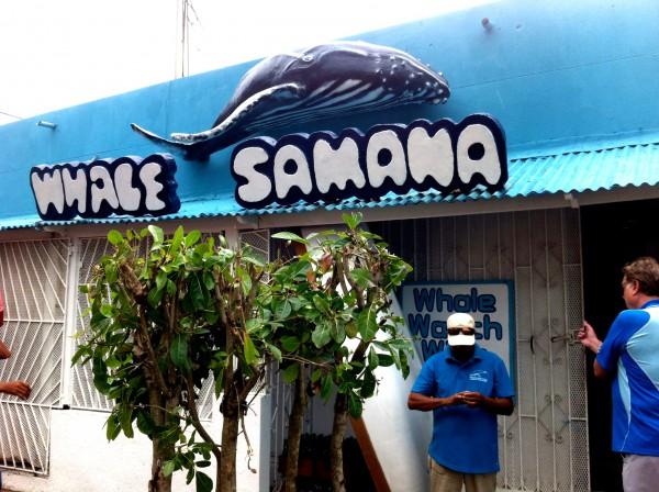Whale Samaná