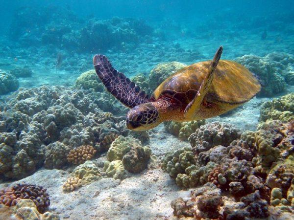 Bedrohte Meerestiere